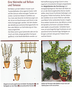 fader wein im garten die besten sorten pflanzen schneiden verwerten neu. Black Bedroom Furniture Sets. Home Design Ideas