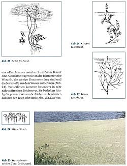 Karpfen/&Nebenfische Pflege//Zucht//Bewirtschaftung//Buch Geldhauser Der Teichwirt