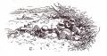 Alfred Stenger: Der letzte deutsche Angriff - Reims 1918